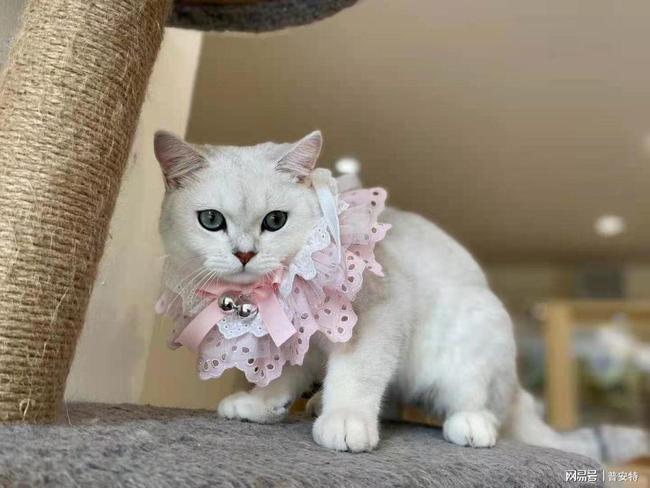 菲尔顿宠物能看病吗猫咪杯状病毒科普